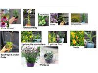 Joblot of 10x perennial plants for the garden