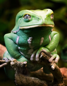 Exotic frogs wanted !