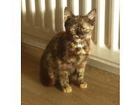 Found - Kitten