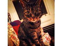 Loving Cat Needs New Home