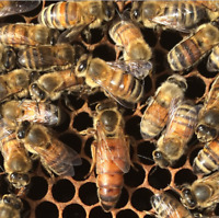 Intermediate Beekeeping Course
