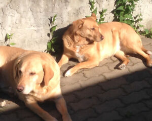 Wanted: A home for me and my 2 dogs