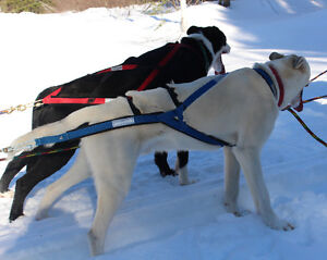 equipment for dog powered sports