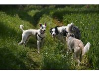 Dog-Sitting/Dog Walking in Norwich