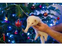 Cute little ferret looking for good home