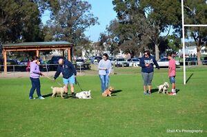 PK DOG TRAINING Pakenham Cardinia Area Preview