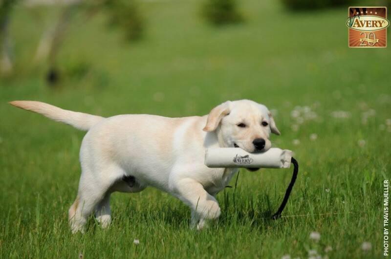 """Avery Greenhead Gear Sporting Dog 2"""" White Canvas Training Bumper Dummy ATB"""