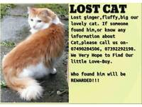 Lost cat! Please help to find!
