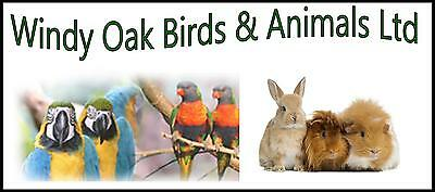 Windy Oak Birds and Animals Ltd