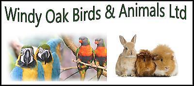 Windy Oak Birds and Animals Ltd
