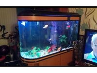 Fish tank, Large room dividing tank, 375 Ltrs, comes with all you need except fish. Stunning tank.