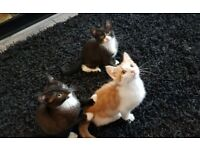 Kittens now available for forever homes