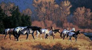 Appaloosa Horse /  Horses in the Wild Wallpaper 10.5' x 6' Wall Mural WB5940M