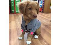 Brilliant condition small dog/puppy hoodie