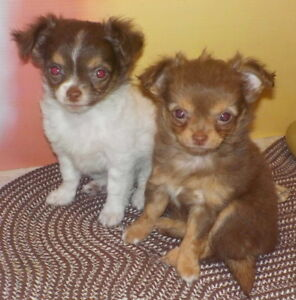 PRETTY PENNY and CUDDLY COCO Looking for their People to Love!