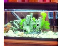 2 musk turtles and fish tank with all accessories