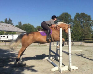 Palomino/Paint-Mare For Sale