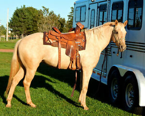 2 Registered palomino AQHA mares for sale