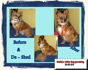 Shelly's Little Dog Grooming Regina Regina Area image 4