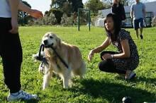 PET SITTER, PET MINDER Lilydale Yarra Ranges Preview