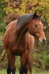 Horse for part-lease
