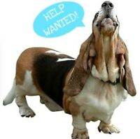 Dog walker & pet sitter needed