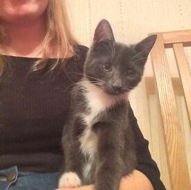 Missing cat/ kitten