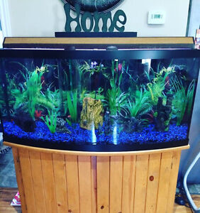 70 gal fish tank and stand