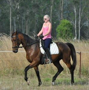 2x thoroughbreds for lease Coominya Somerset Area Preview