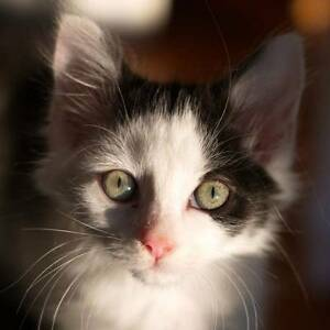 """Cressida - """"2nd Chance Cat Rescue"""" Noble Park Greater Dandenong Preview"""
