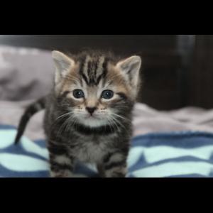 Titan rescue kitten Nk2923 VET WORK INCLUDED