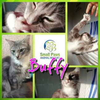 ADOPT DONT SHOP - BUFFY - Small Paws Animal Rescue QLD