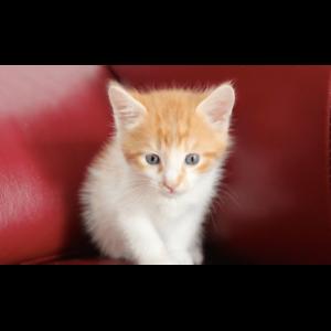 Henry rescue kitten NK2834 VET WORK INCLUDED