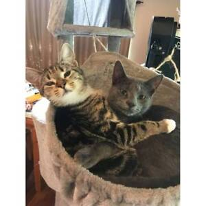Maya and Oliver - Soquilichi Rescue