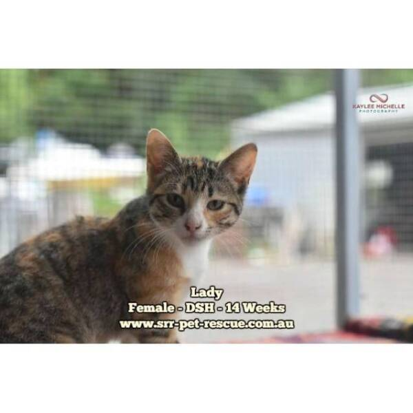 Lady - Soquilichi Rescue | Cats
