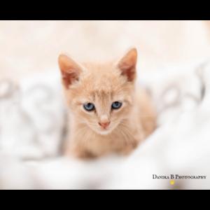 Luigi rescue kitten NK4066 VET WORK INCLUDED
