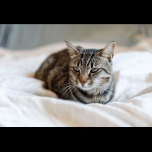 Izzy rescue kitten NC0638 VET WORK INCLUDED