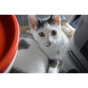 Nestor the friendly trojan warrior kitten!