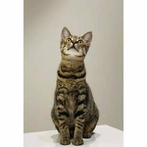 4865 : Husqvarna - CAT for ADOPTION - Vet Work Included