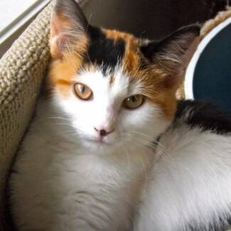 Bronte - Kitten For Adoption - Cheltenham Cat Rescue