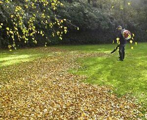 Autumn Fall yard clean up leaves lawn raking bagging & removal Oakville / Halton Region Toronto (GTA) image 1