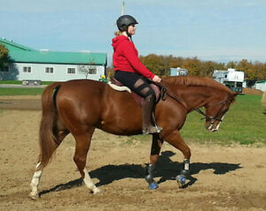 PART BOARD - OLDER HORSE WITH SPUNK