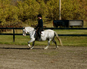 Frontier Silver Flit - Welsh Pony