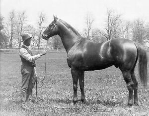 MAN O WAR HORSE RACING 8X10 GLOSSY PHOTO PICTURE IMAGE #2