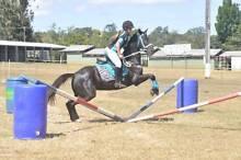 Australian Stock horse Mareeba Tablelands Preview