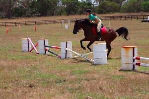 Stunning Warmblood Gelding Bowral Bowral Area Preview