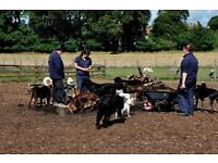 CITIDOGS CRECHE - 2 PART TIME DRIVER/CRECHE ASSISTANT ROLES