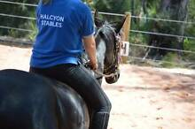 Own A Pony For A Day School Holidays Camp Karragullen Armadale Area Preview