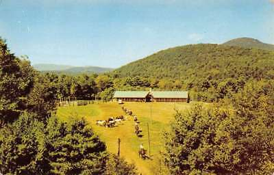 Lake Luzerne New York Painted Pony Ranch Birdseye View Vintage Postcard (Painted Pony Ranch)