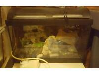 Small fish tank set up 50cm by 25cm